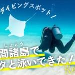 【マンタを目撃】慶良間諸島でダイビングで感動しちゃった件の画像