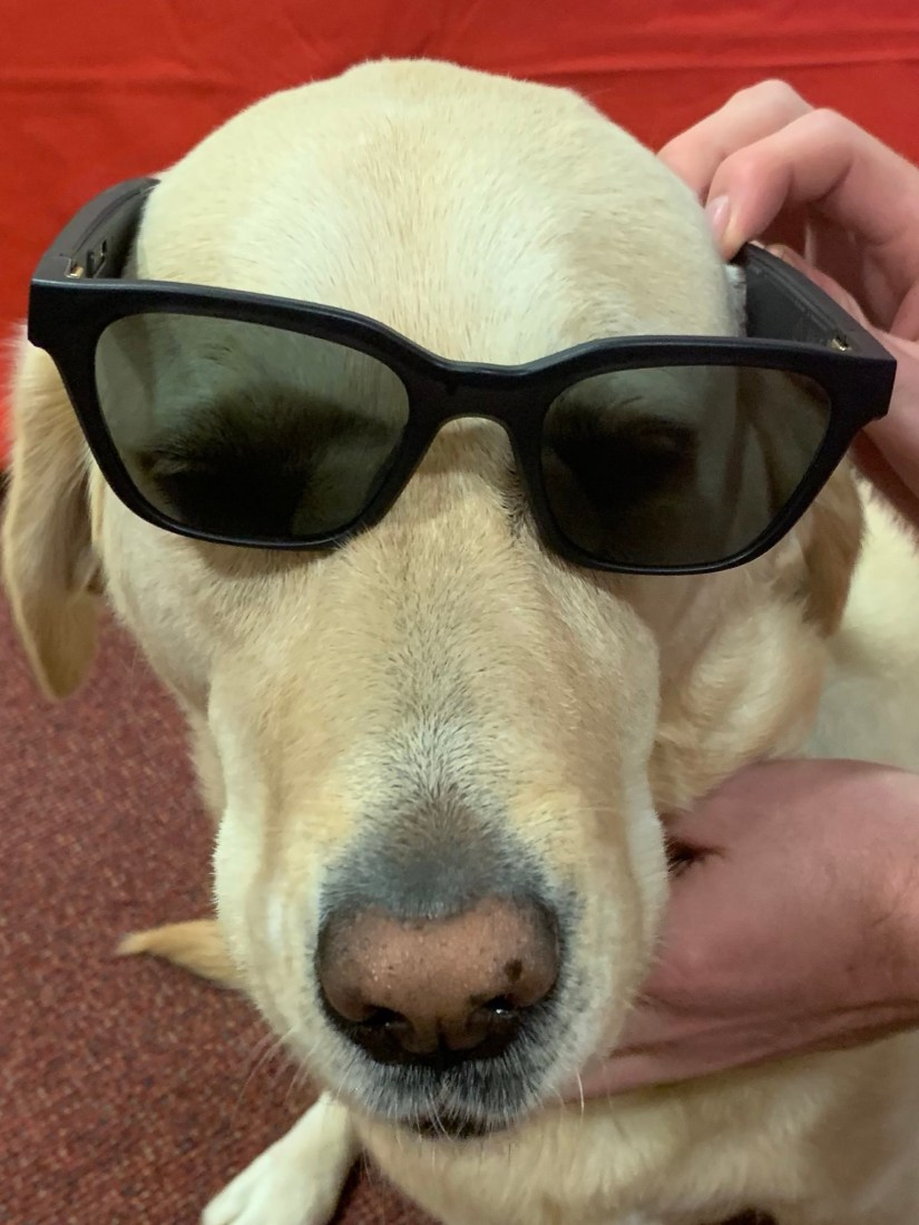 Toffee looking cool with a set of sunglasses on.