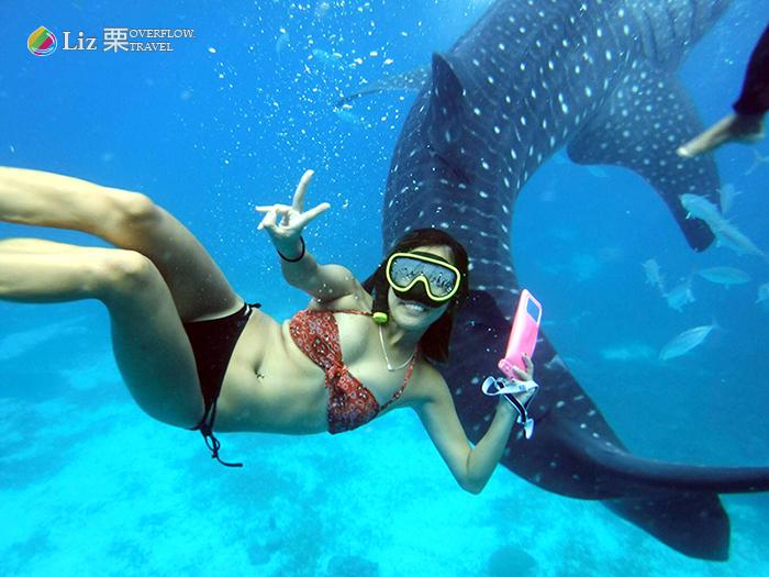 Oslob-菲律賓宿霧-看鯨鯊潛水