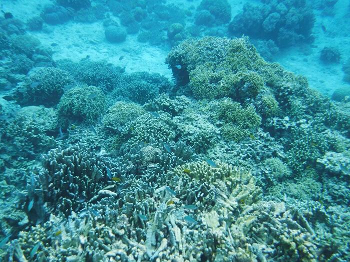 菲律賓浮潛,浮淺