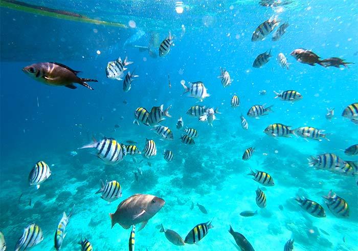 宿霧浮潛, 跳島, 海中世界, 魚
