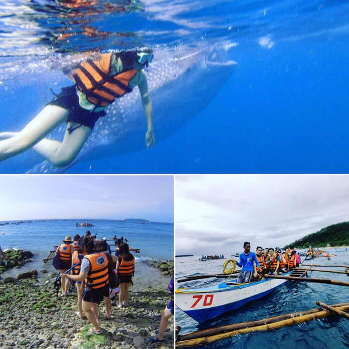 Oslob與鯨鯊共游, 菲律賓旅遊推薦