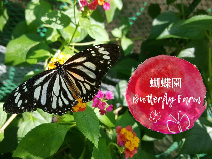 蝴蝶園, Butterfly Farm, 薄荷島旅遊景點推薦