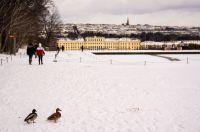 Austria_Wien_130