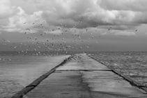 Baltic2016_Nida_099