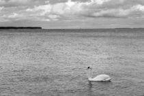 Baltic2016_Nida_107