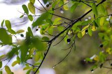 2015_10_09-11_Sulov&Cachtice_009
