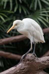 TripLovers_Malaysia_KL_048_KL-Bird-Park