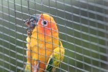 TripLovers_Malaysia_KL_059_KL-Bird-Park