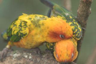 TripLovers_Malaysia_KL_062_KL-Bird-Park