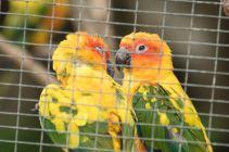 TripLovers_Malaysia_KL_064_KL-Bird-Park