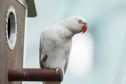 TripLovers_Malaysia_KL_067_KL-Bird-Park