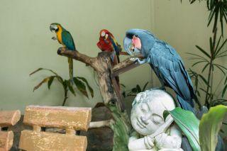 TripLovers_Malaysia_KL_074_KL-Bird-Park