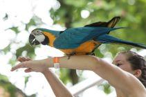 TripLovers_Malaysia_KL_081_KL-Bird-Park