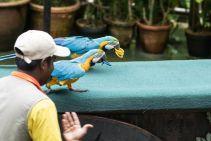 TripLovers_Malaysia_KL_087_KL-Bird-Park
