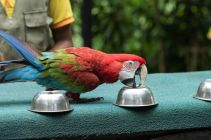 TripLovers_Malaysia_KL_095_KL-Bird-Park