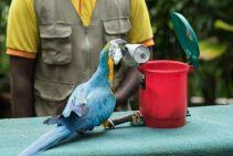TripLovers_Malaysia_KL_098_KL-Bird-Park