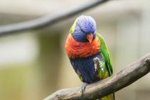 TripLovers_Malaysia_KL_104_KL-Bird-Park