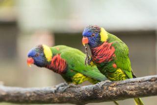 TripLovers_Malaysia_KL_106_KL-Bird-Park