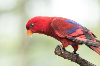 TripLovers_Malaysia_KL_107_KL-Bird-Park