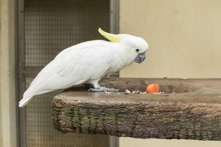 TripLovers_Malaysia_KL_129_KL-Bird-Park