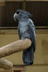 TripLovers_Malaysia_KL_130_KL-Bird-Park