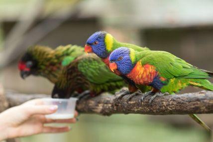 TripLovers_Malaysia_KL_134_KL-Bird-Park