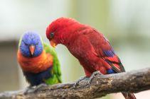 TripLovers_Malaysia_KL_135_KL-Bird-Park