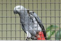 TripLovers_Malaysia_KL_137_KL-Bird-Park
