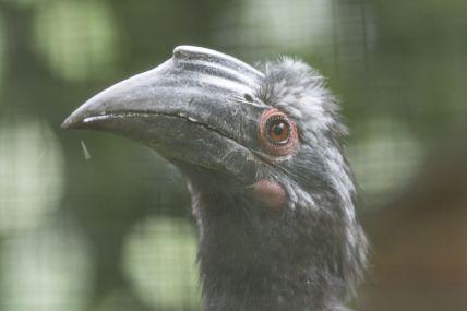 TripLovers_Malaysia_KL_144_KL-Bird-Park
