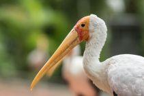 TripLovers_Malaysia_KL_147_KL-Bird-Park