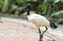 TripLovers_Malaysia_KL_149_KL-Bird-Park