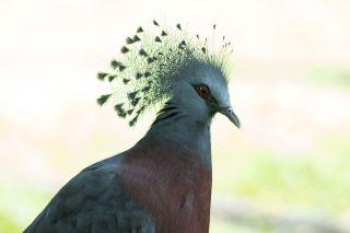 TripLovers_Malaysia_KL_165_KL-Bird-Park