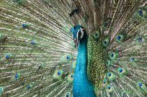 TripLovers_Malaysia_KL_187_KL-Bird-Park