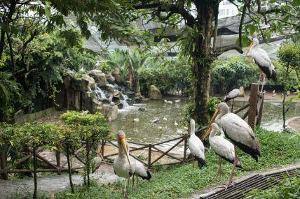 TripLovers_Malaysia_KL_188_KL-Bird-Park