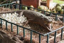 TripLovers_Malaysia_KotaKinabalu_130_TuaranCrocodileFarm