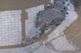 TripLovers_Malaysia_KotaKinabalu_152_TuaranCrocodileFarm