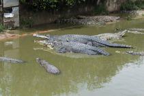 TripLovers_Malaysia_KotaKinabalu_184_TuaranCrocodileFarm