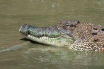 TripLovers_Malaysia_KotaKinabalu_189_TuaranCrocodileFarm