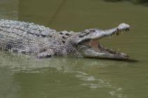 TripLovers_Malaysia_KotaKinabalu_191_TuaranCrocodileFarm