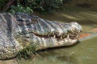 TripLovers_Malaysia_KotaKinabalu_194_TuaranCrocodileFarm