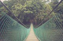 TripLovers_Malaysia_Sandakan_107_SepilokRainforest