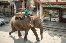 TripLovers_Chitwan_006