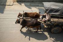 TripLovers_Chitwan_007