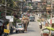 TripLovers_Chitwan_008