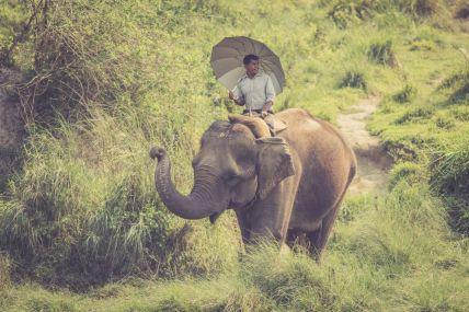 TripLovers_Chitwan_012