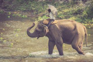 TripLovers_Chitwan_013