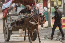 TripLovers_Chitwan_041