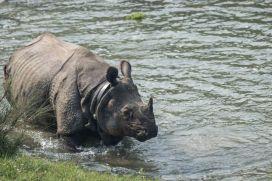TripLovers_Chitwan_110