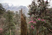 TripLovers_AnnapurnaCircuit_046a